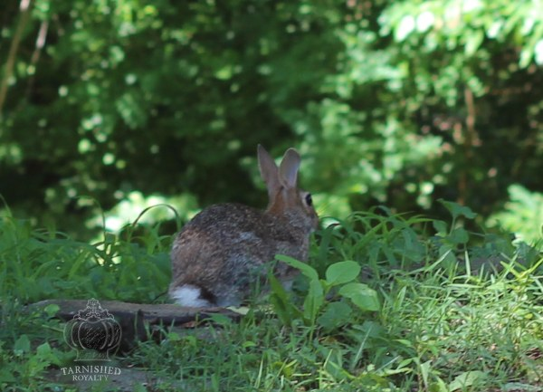 rabbit_yard_2015_2