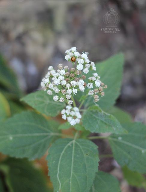 autumn_flower_ladybug_beetle