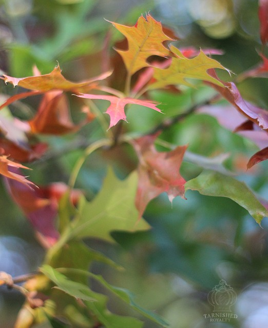 autumn_leaves_2